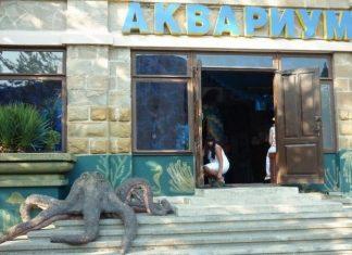 Отдых и туризм на курортах Сочи, Геленджика, Анапы и Таманского полуострова